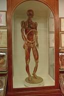 La Specola Collection, Wax Anatomical Models