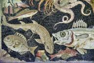 Marine Fauna Mosaic
